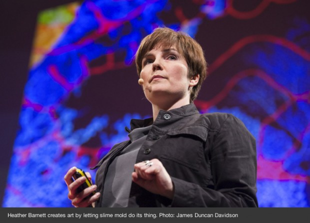 Heather Barnett, TED talk