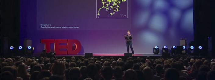 TED talk: What humans can learn from semi-intelligent slime