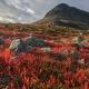 red flowers on hillside under Mount Saana